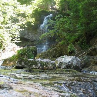 Wald Wasser Zauber Weg