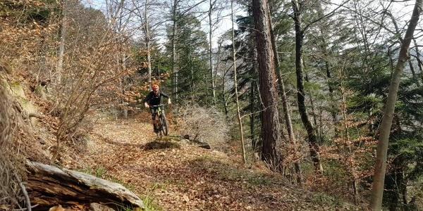 Nasstobel Trail