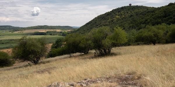 Az Őrtorony-kilátó az Apáti-hegy kilátópontjáról