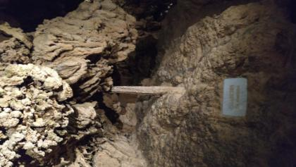 Anna barlang Éva fája