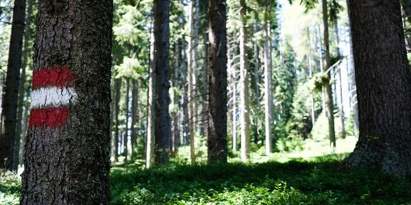 Schon bald geht es im kühleren Wald weiter. Die Route ist gut markiert.