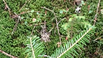 Frosch Etappe 5 im Wald