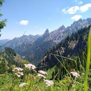 Blick vom Reitweg auf die Ammergauer Alpen
