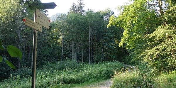 Wanderweg zur Reichenbachklamm