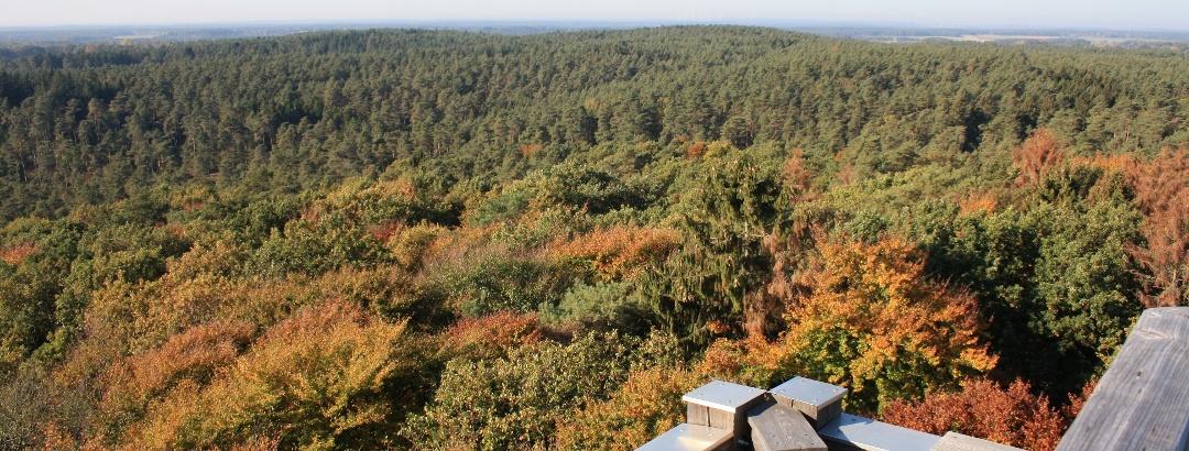 Buntes, weitläufiges Waldgebiet