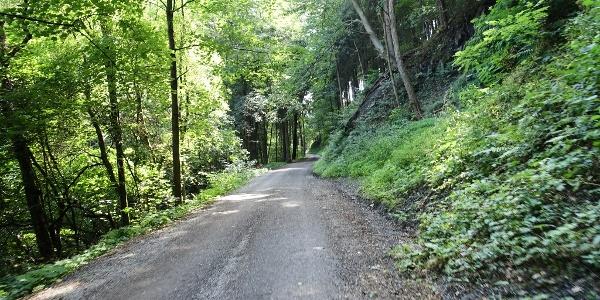 """Forststraße (""""Demarstraße"""") - offizielle Mountainbikestrecke"""
