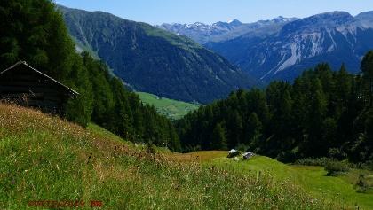 Aussicht von der Zufahrt zur Reschner Alm Richtung Langtauferer Tal