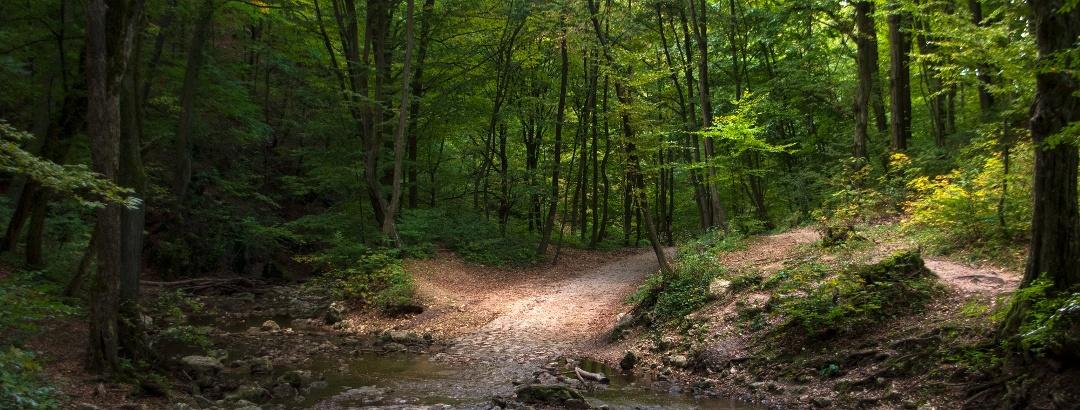 A Cuha-patak több helyen keresztülfolyik a szurdokban vezető úton