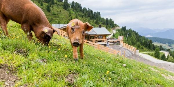 Tierische Bewohner auf der Balbach Alm