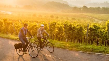 Radfahrer im Weinberg