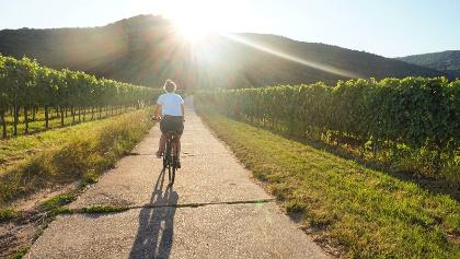 Radweg entlang der Weinreben