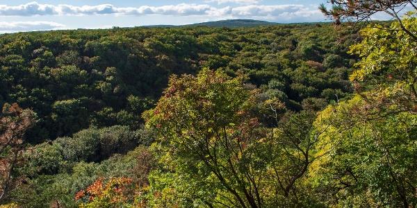 A Burok-völgy sűrű erdősége a plató pereméről