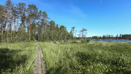 Duckboards and part of Molnviken