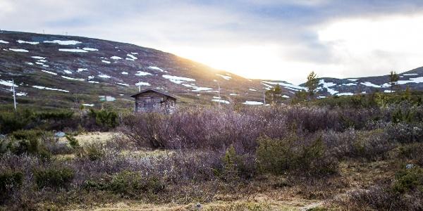 Pallas Porokämppä and Fell Pallastunturit in background
