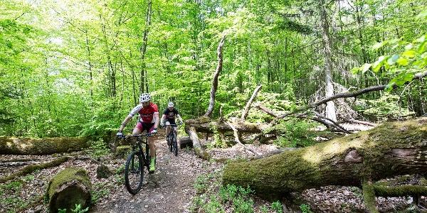 Mountainbiker auf der Pur