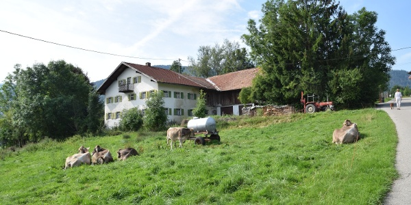 Alter Bauernhof mit Jungvieh im Weiler Wörth