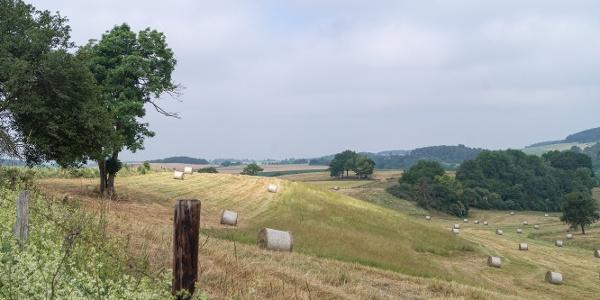 Blick über Felder und Wiesen