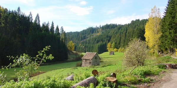 Zinsbachtal