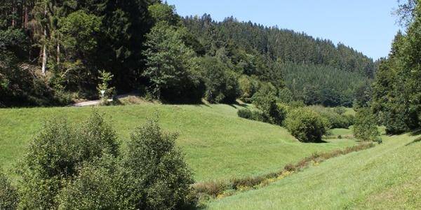 Köllbachtal