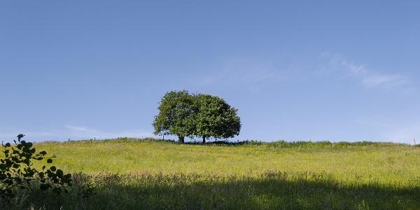 Aussicht über Wiesen
