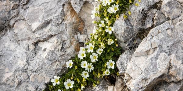 immer wieder schöne Blumen