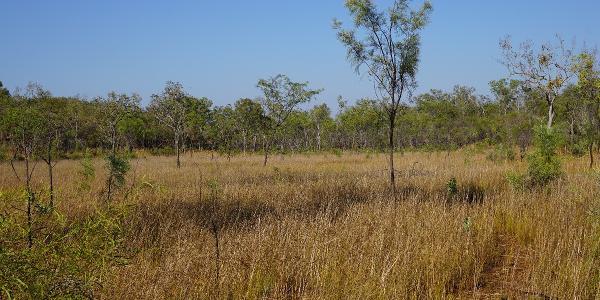 In der Trockenzeit ist die Landschaft ziemlich ausgetrocknet