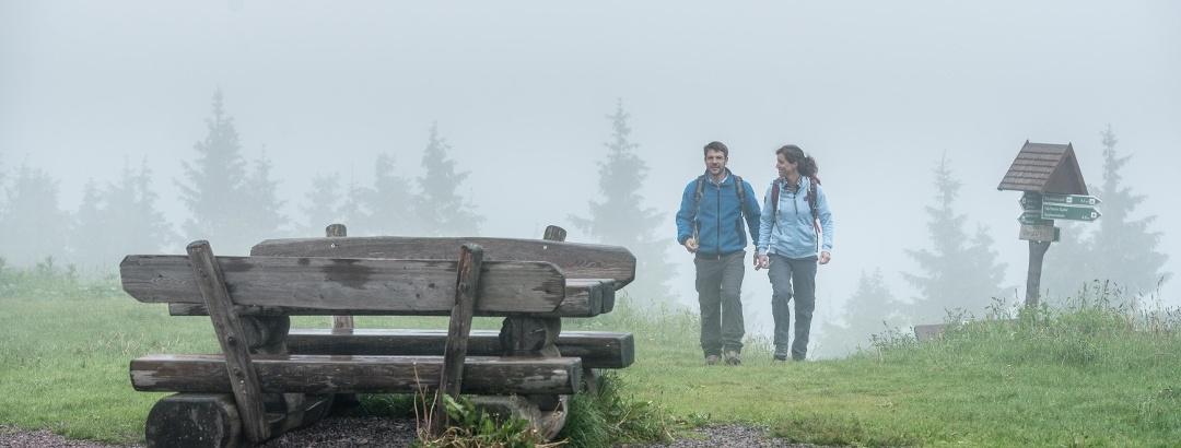 Kulturwandern im Wald