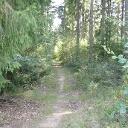 Wie gesagt, sehr schöne Waldpfade