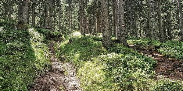 Der Hochwurzen Trail auf dem Weg #60 bergauf durch den Wald