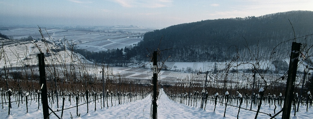 Winterlandschaft Keschdebusch im Landau-Land