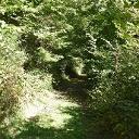 Herrliche Waldpassage