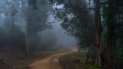 Forest Trail in Mist