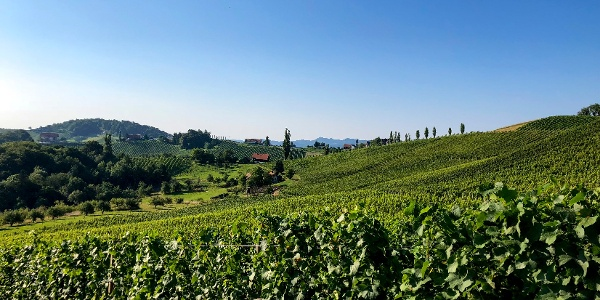 Weingärten über Weingärten als Wegbegleiter