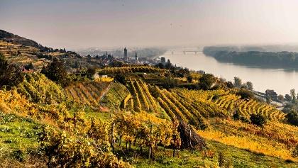 Herbstlandschaft oberhalb Krems