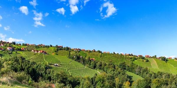 Die Weingärten - Riede Hochgrail in St. Stefan ob Stainz