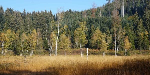 Herbstlich gefärbtes Hochmoor Enzenau