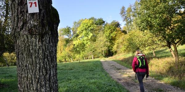 Markierung am Rundweg Nr. 71 des Naturpark Südeifel