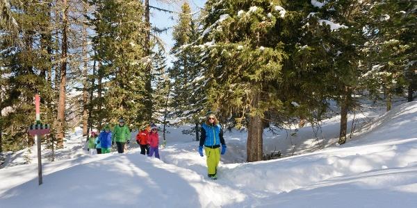Der Trail führt durch den Wald
