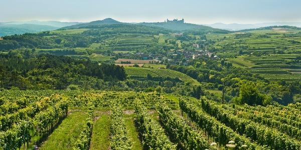 Blick von den Weinrieden in Krustetten auf das Stift Göttweig