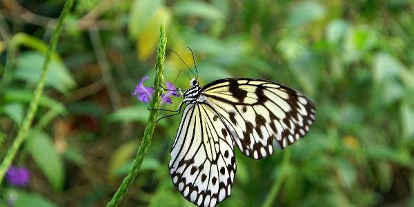 Papiliorama Kerzers.