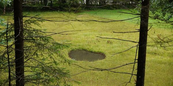 Auf dem Rundweg Dreiwässern trifft man auf viele Teiche und Tümpel in der Natur.