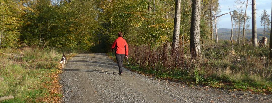 Der Rückweg ins Tal erfolgt wieder über Waldwege