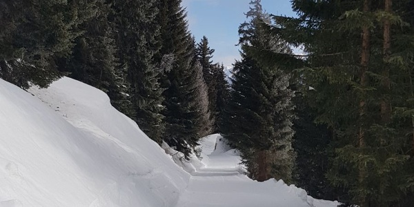Schlittelweg Fiescheralp - Lax