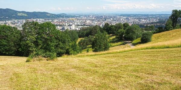 Rückblick über die Moarwies'n nach Linz