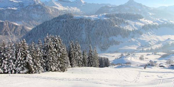Alte Plangg mit Höchgütsch und Ybriger Berge