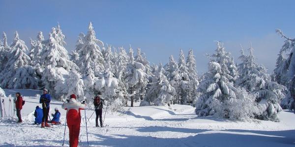 Langlaufen auf dem Loipenring1 im Adlergebirge