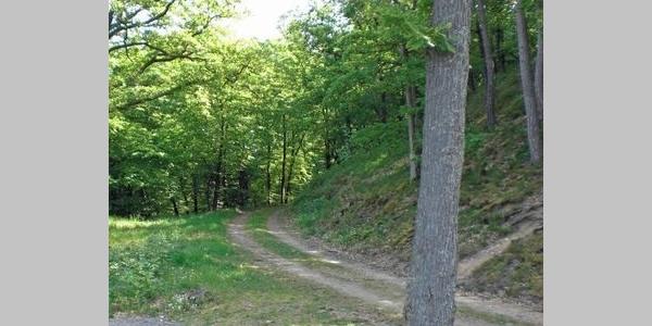 Blick auf den oberen Hillertweg