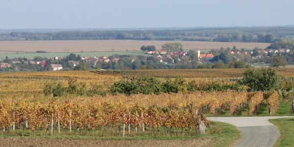A Locsmánd melletti szőlőhegyre erős kaptató vezet fel, cserébe viszont gyönyörűen rendben tartott szőlők között gurulhatunk