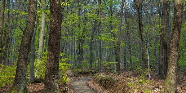 Erdőrészlet Vörös-kereszttől délre
