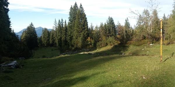 """Große """"Skitouren-"""" Lichtung, Blickrichtung Nord (vom Parkplatz kommend)."""